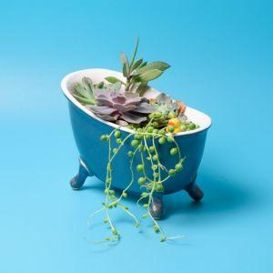 Bath pot for succulents