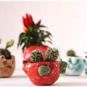 Red succulent pot