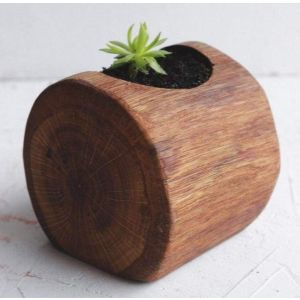 "Wood pot for succulent  ""Green wave"""