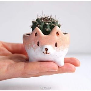 Animal succulent pot