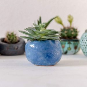 Blue plant container
