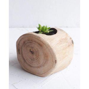 """Natural wood succulent pot  """"Oak log"""""""