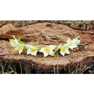 Pretty headbands. Hairband «Jonquil»