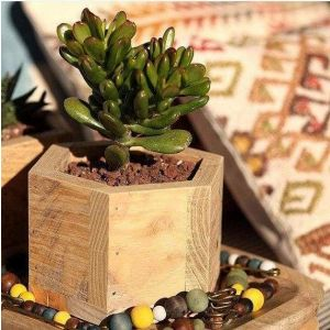 Reclaimed wood mini succulent hexagon planter