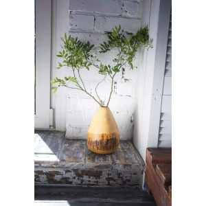 Rustic tree bark mango wood vase